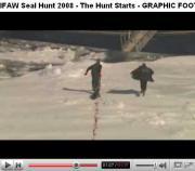 Chasse aux phoques au Canada